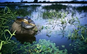 Culebra enrollada en rio