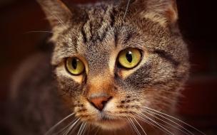 Fondo de pantalla de gato cafe