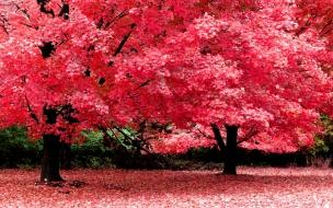 Flores con hojas rosas