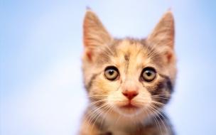 Fondo de pantalla gato con miedo