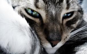 Fondo de pantalla mirada profunda de gato