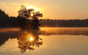 Isla de arboles en lago