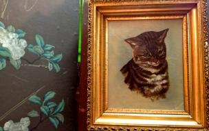 Fondo de pantalla retrato de un gato