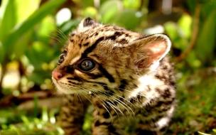Fondo de pantalla tierno gatito