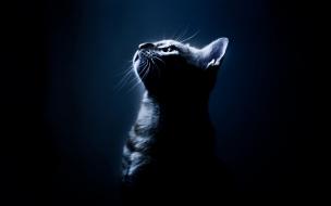 Fondo de pantalla gato viendo la luz