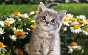 Fondo de pantalla gato en medio de flores