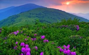 Montañas y flores lilas