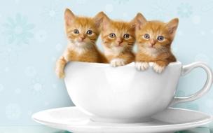 Fondo de pantalla gatitos en una taza