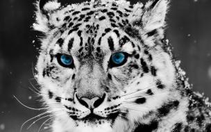 Fondo de pantalla tigre ojos azules