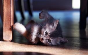 Fondo de pantalla gatito jugando