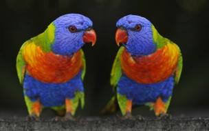 Fondo de pantalla de loros multicolores