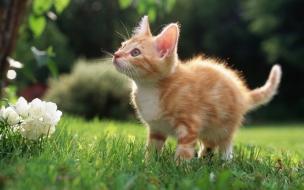 Fondo de pantalla gato paseando