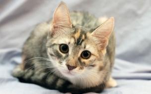 Fondo de pantalla gato atento