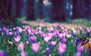Spring flower park