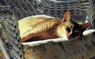 Fondo de pantalla gato en sillon