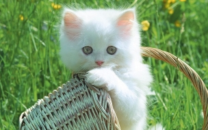 Funny Cats And Kittens Wallpapers