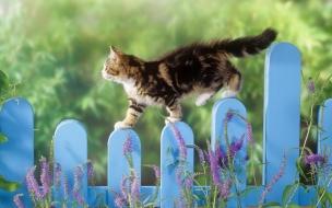 Fondo de pantalla gato en una cerca