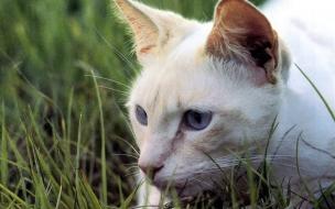 Fondo de pantalla gato cazando