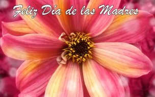 Feliz Día de las Madres 1