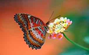 Butterfly on flower wide