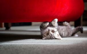 Cute little cat wide