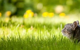Fondo de pantalla gato en jardin