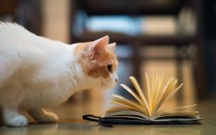 Fondo de pantalla gato viendo libro
