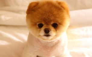 Cute dog boo
