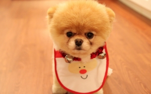 Cute dog christmas