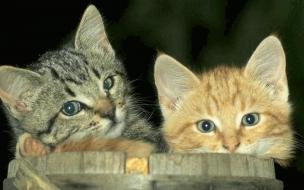 Fondo de pantalla gatos unidos