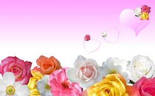 Roses  love hearts