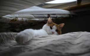 Fondo de pantalla gatito ocioso