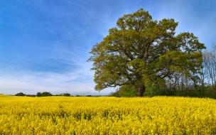 Swedish fields