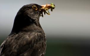 Fondo de pantalla de ave negra