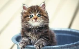 Fondo de pantalla gatito en una tina