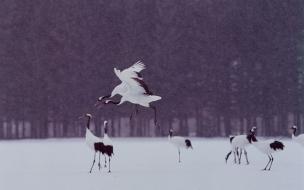 Aves en Invierno