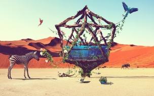 Life i desert