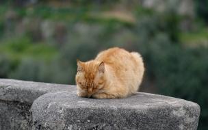 Fondo de pantalla gato cafe dormido
