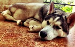 Fondo hd de perro durmiendo