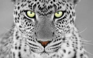 Fondo de pantalla de felino mirando