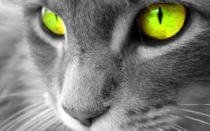 Wallpaper gato con ojos hermosos