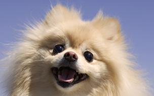 Fondo de pantalla de perrito