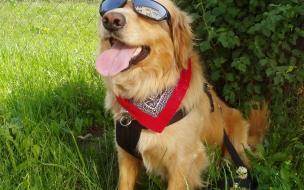 Fondo de pantalla de perro con gafas
