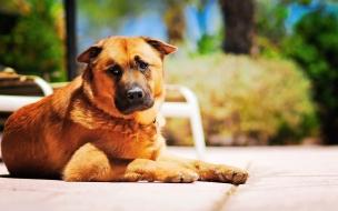 Fondo de pantalla de perro descansando