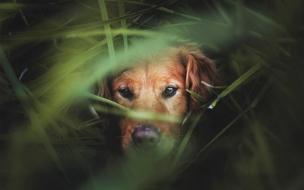 Fondo de pantalla de perro entre montes