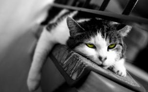 Fondo hd de gato descansando
