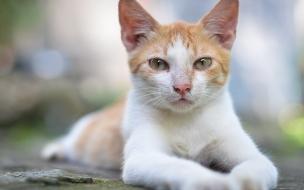 Fondo hd de hermoso gato