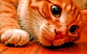 Fondo hd de gatito Jugando