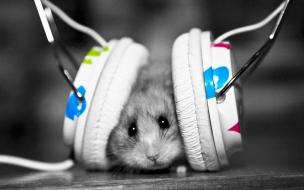 Wallpaper de un roedor escuchando musica