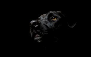 Fondo de pantalla de Perro Negro